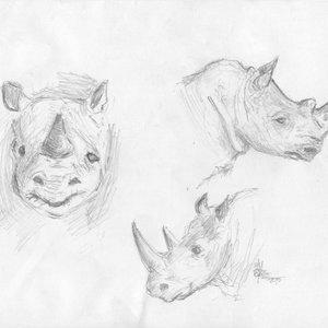 Rinoceronte_9039.JPG