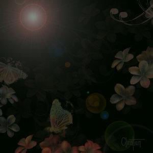 mariposas_flores_noche_10850.jpg