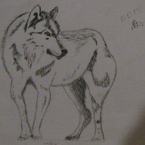 wolfie_12180.JPG