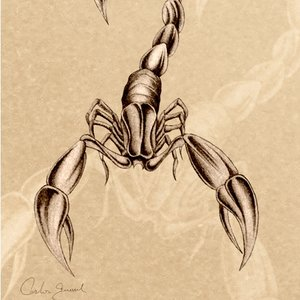 Escorpion_12419.jpg