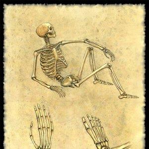 huesos_12411.jpg