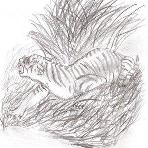 Tigre_1445.jpg
