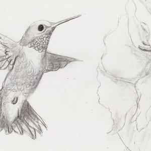 Colibri_1584.jpg