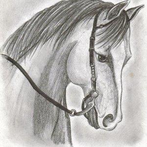 caballo_1887.jpg