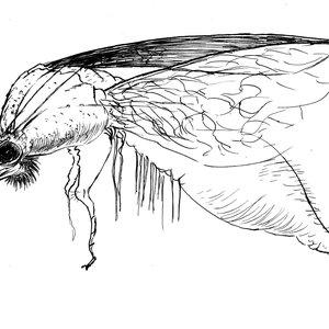 Mosquito_19448.jpg