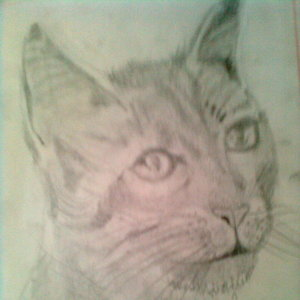 Mis primeros dibujos GATOO!!