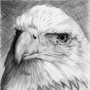 Aguila_19685.jpg