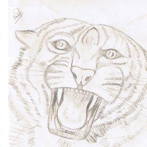 Tigre_19954.jpg