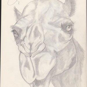 Camel_21390.jpg