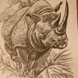 rinoceronte_22480.JPG