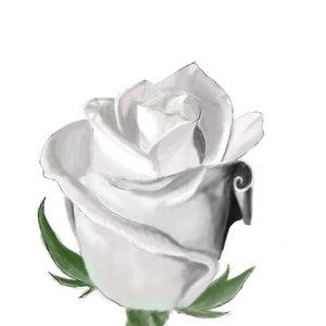 rosa_blanca_22528.jpg