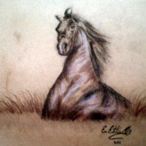 caballo_en_pasto_en_venta_22580.jpg