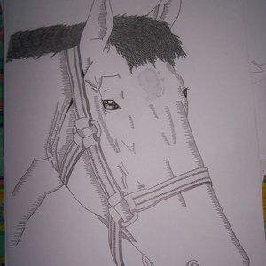 caballo_22786.JPG