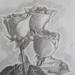 rosas_23300.jpg