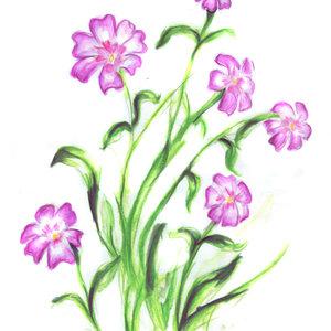flores_26743.jpg