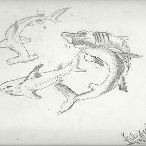 mi_bloc_de_primaria_2003_tiburones_32368.jpg