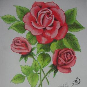 rosas_32824.JPG