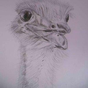 avestruz_32960.jpg