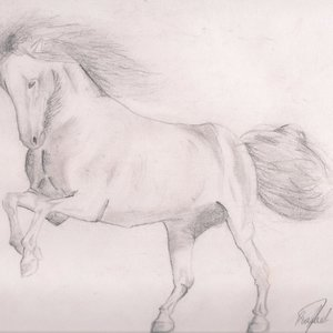 caballo_por_restrox_28215.jpg