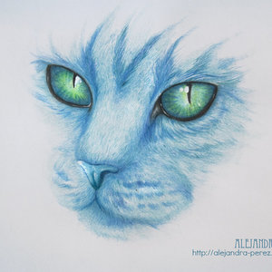 the_blue_cat_36763.jpg