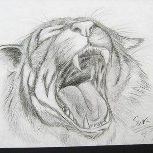 tigre_37206.jpg
