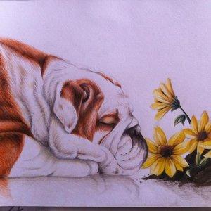 bulldog_38779.jpg