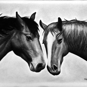 equinos_39869.jpg