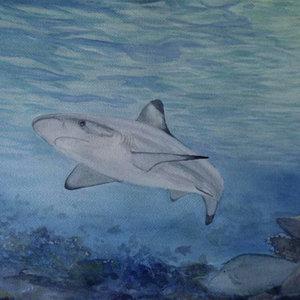 shark_acuarela_40375.jpg