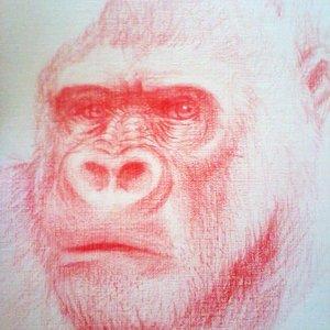 primate_40469.jpg