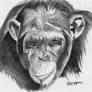 chimpance_40539.jpg