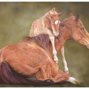 caballos_40779.JPG