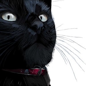 El gato llamado ''suerte''