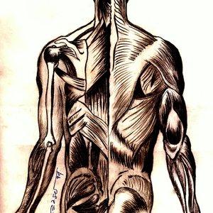 anatomia_41847.jpg