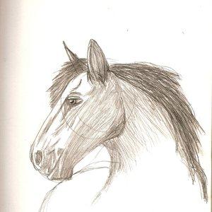 caballo_de_guerra_42512.jpg