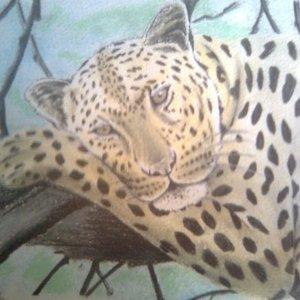 jaguar_42796.jpg