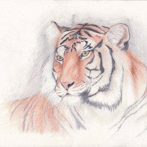 tigre_42801.jpg