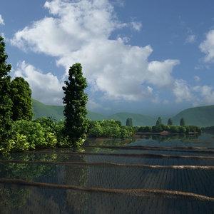 arrozal_43189.jpg