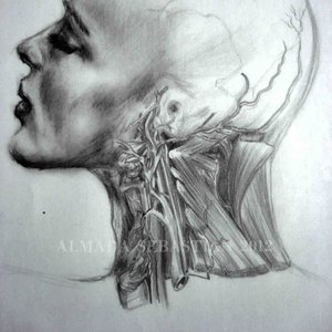 anatomia_43405.jpg