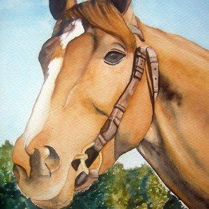 caballo_43394.jpg
