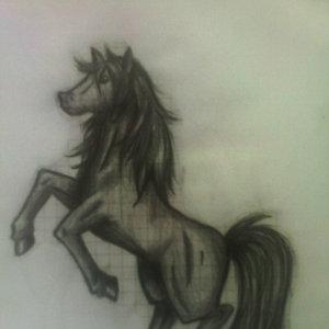 caballo_44080.jpg