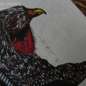 ave_extinta_que_noce_que_se_llama_44694.jpg