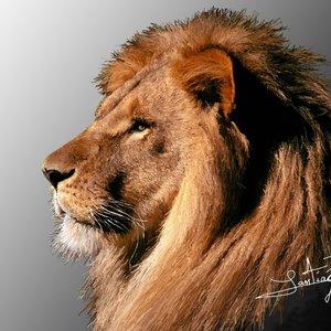 lion_44966.jpg