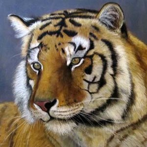 tigre_de_bengala_45295.jpg