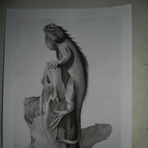 iguana_46146.JPG