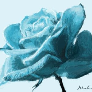 Rosa celeste.