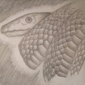 serpiente_dibujos_de_practica_1_30970.JPG