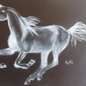 caballo_en_negativo_30988.jpg