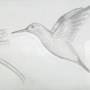 colibri_dibujos_de_practica_2_30980.JPG
