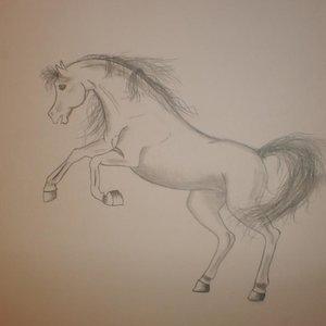 caballo_54509.jpg