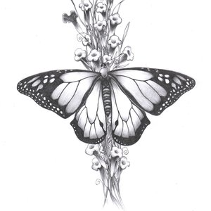 mariposa_54884.jpg